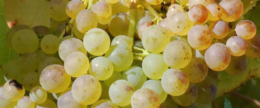 Wine of the Month, July 2015 – Mont Gravet Cotes de Gascogne