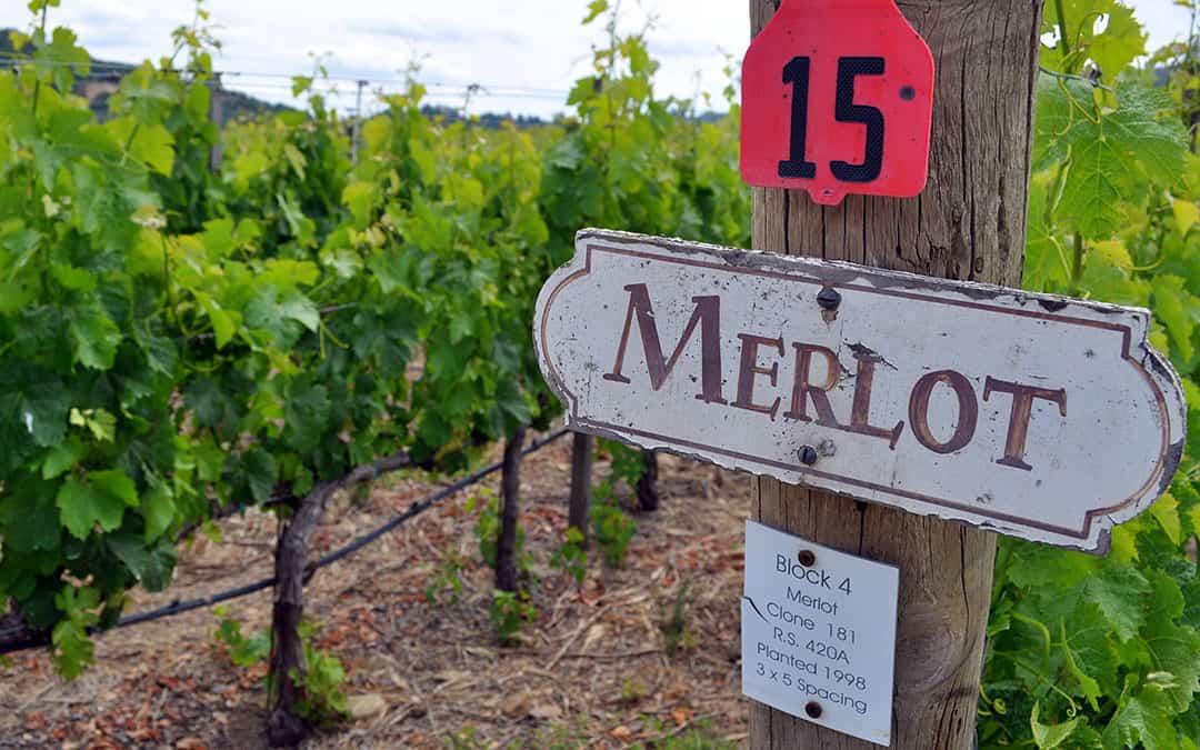 """Wine Of The Month, November 2015 – Tortoise Creek Merlot """"The Revivalist"""""""