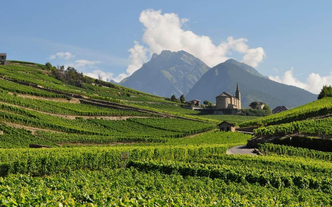 """Costieres De Nimes and Le Charmel """"vin du Vallée du Rhone"""""""